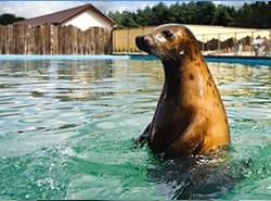 Sea Park - Sarbsk